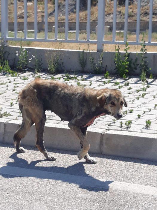 Dinarda Sokak Hayvanları Yardım Bekliyor