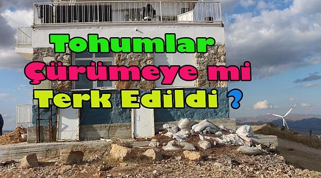 Dinar'da Çam Tohumları Çürümeye mi Terk Edildi?