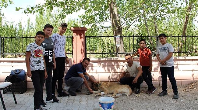 Dinar'da Öğrencilerin Çok Sevdiği Çomar'a Serum Takıldı