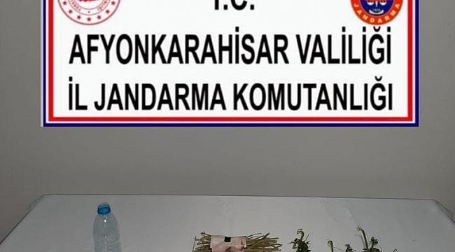 Jandarmadan Dazkırı'da Uyuşturucu Operasyonu