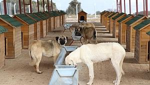 Dinar'da Sokak Hayvanları Sahipsiz Değil